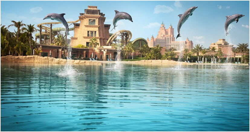 Just Keep Swimming At Dolphin Bay Dubai