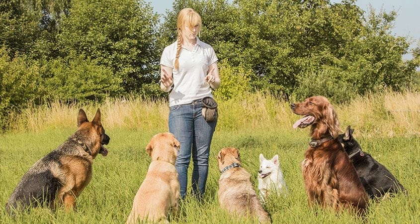 Five Basic Commands To Teach Your Dog