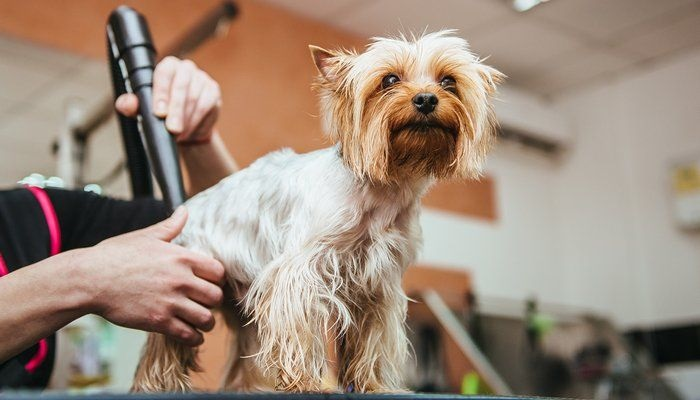 Pet Grooming: 101 Guide For Beginners