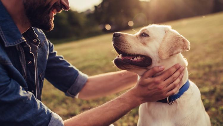 Maximizing your dog ownership- All About Training Your Dog