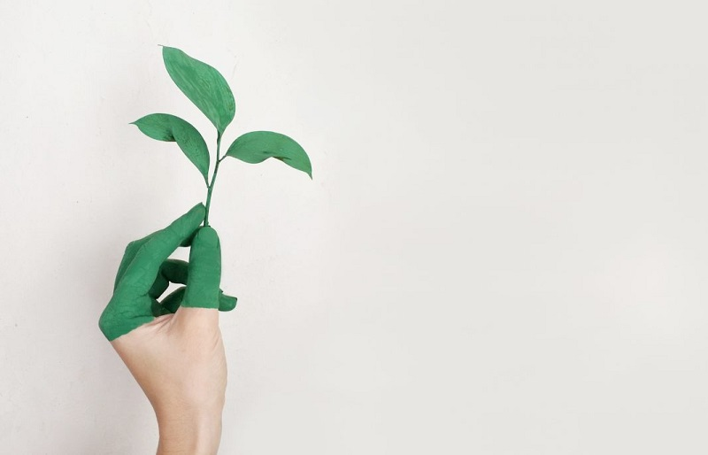 Sustainable Lifestyle Is Beneficial For The Environment