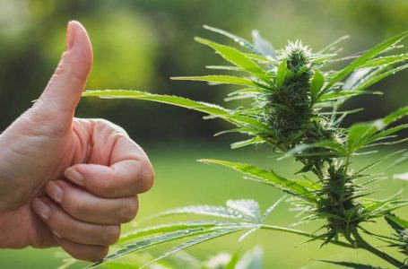 Boost Your Dispensary Sales