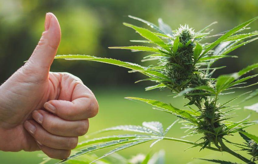Ways to Boost Your Dispensary Sales Right Now