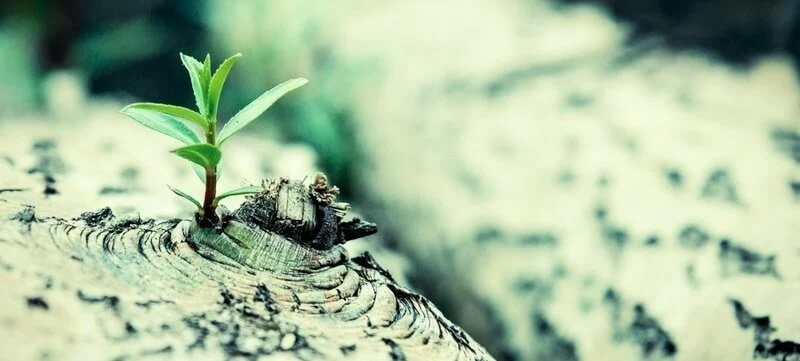 Strength and Resilience often help us Triumph over Adversity