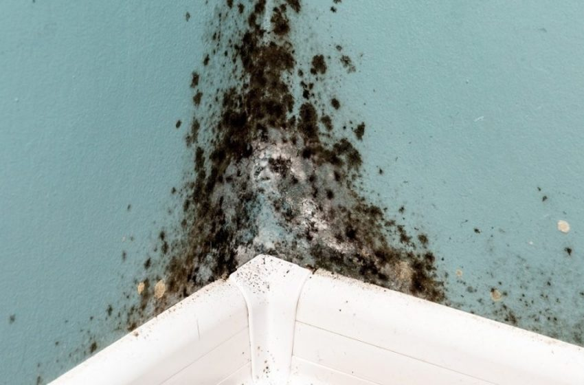 How To Find Mold Exposure Testing Centers