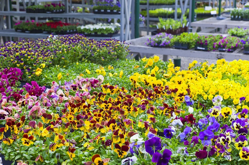Quick Guide Where To Place Plants and Flowers in Home