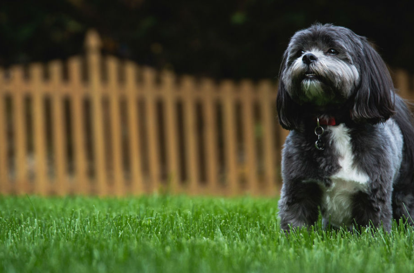 Go Through the Complete Guide to Install An Electric Dog Fence