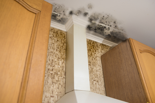 Get Ready For Winter To Avoid Mold