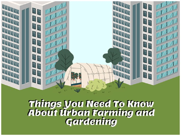 Things You Are Not Told About Urban Gardening in Singapore