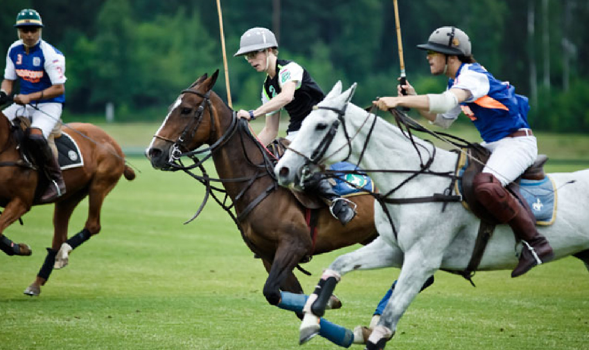 What is a discount equestrian, and what do they sell?